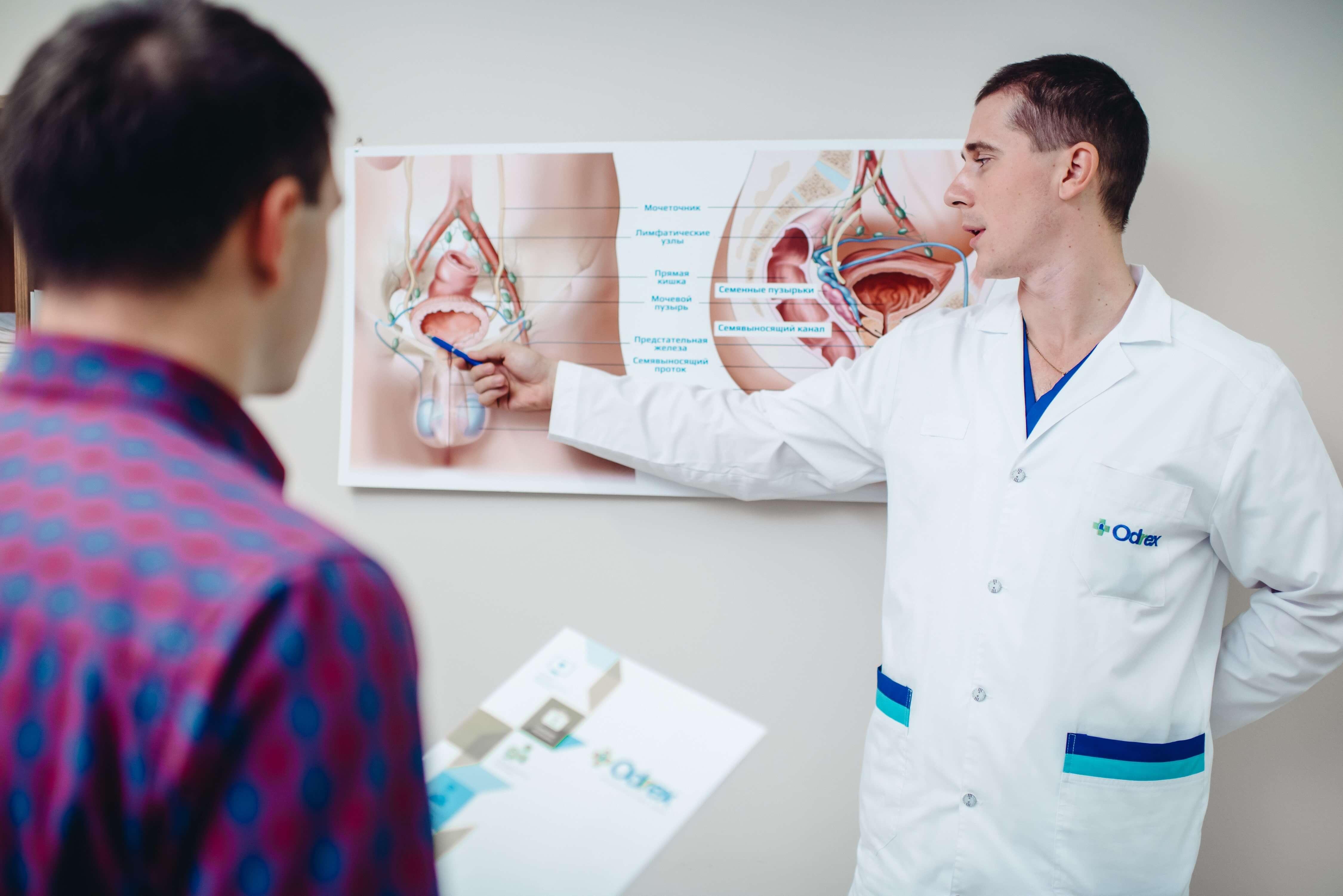 врач показывает схему мочеполовой мужской системы